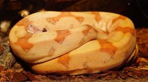 snake-1401741_640
