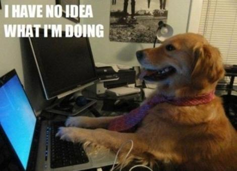 Image Description: a Labrador-dog, wearing a red tie, is sitting at desk with a laptop. It looks as though the dog is typing on the laptop. The picture is captioned with white capital text, I HAVE NO IDEA WHAT I'M DOING.